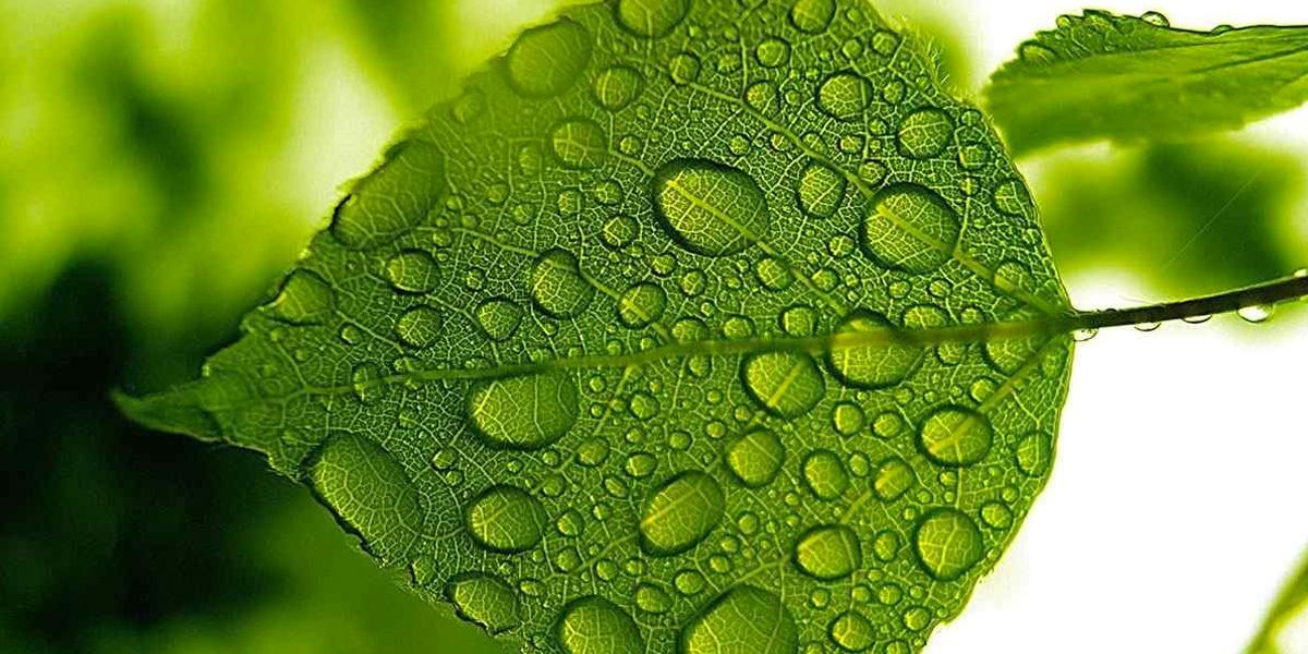 Scuola e Ambiente: la proposta green del Ministero della salute